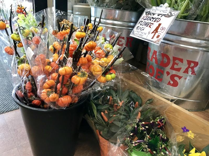 Trader Joe pumpkins